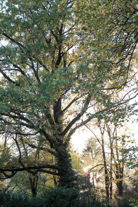 PlantAge_Garten_35.jpg