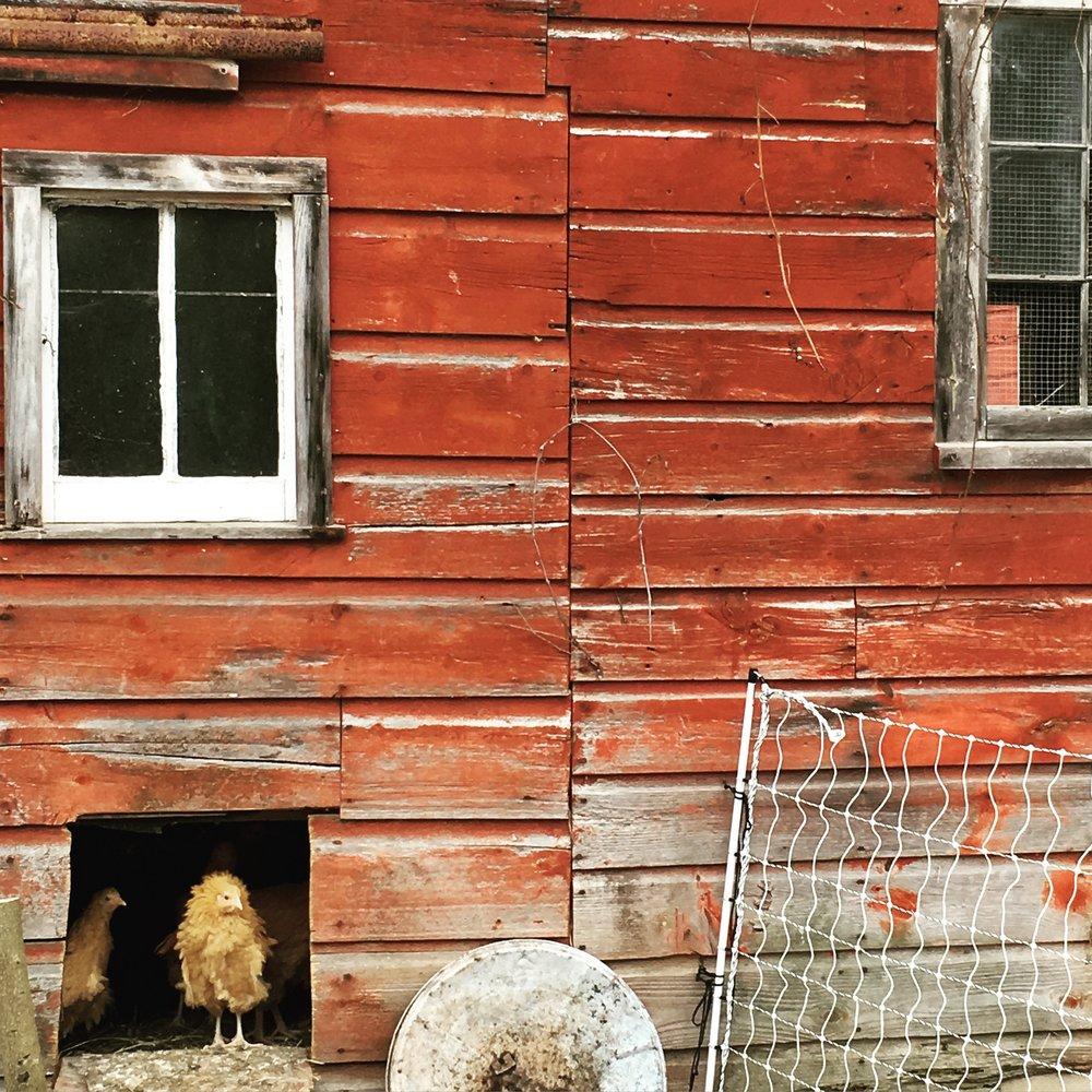 glynwood new paltz barn.jpg