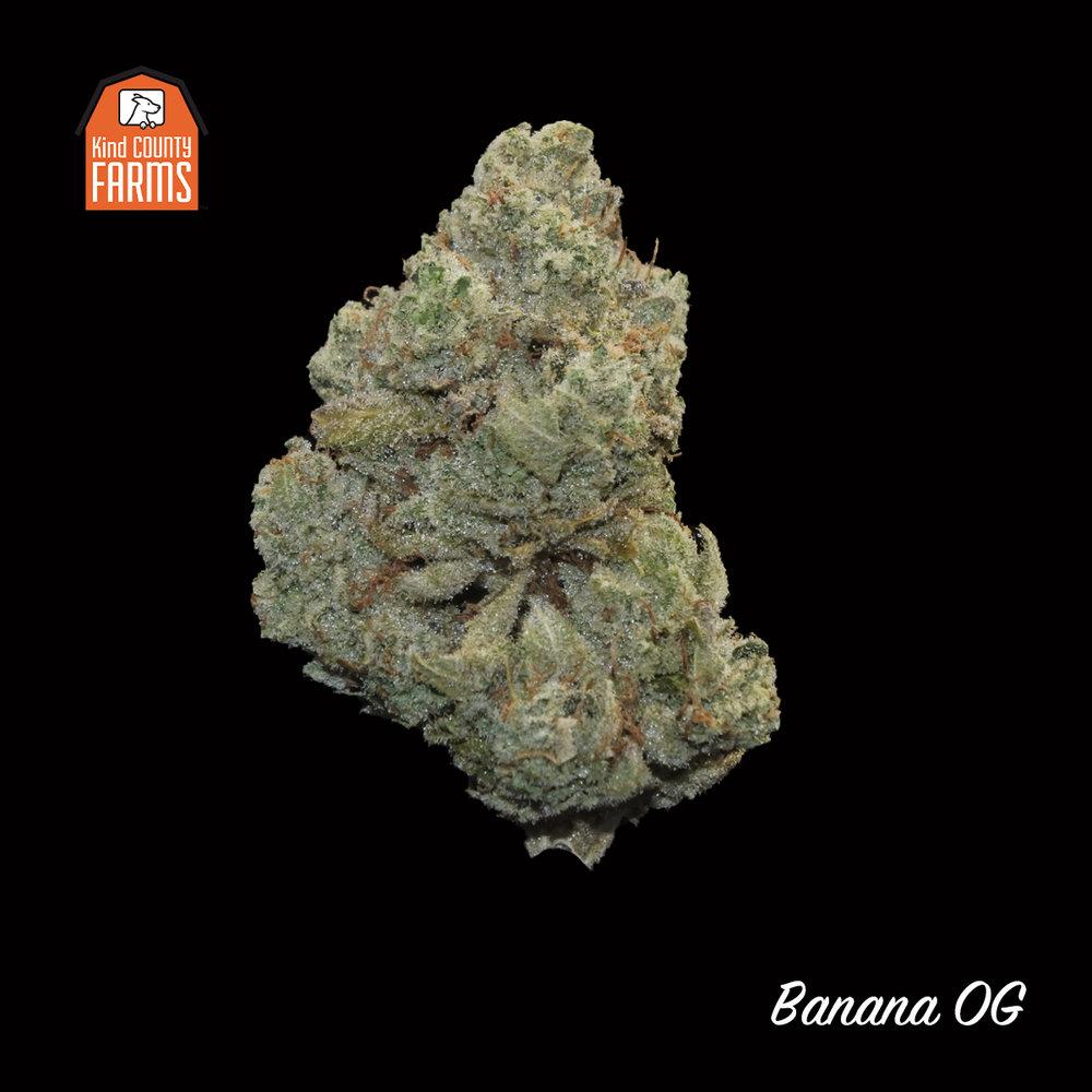 Kind County Farms - Banana OG Flower.jpg