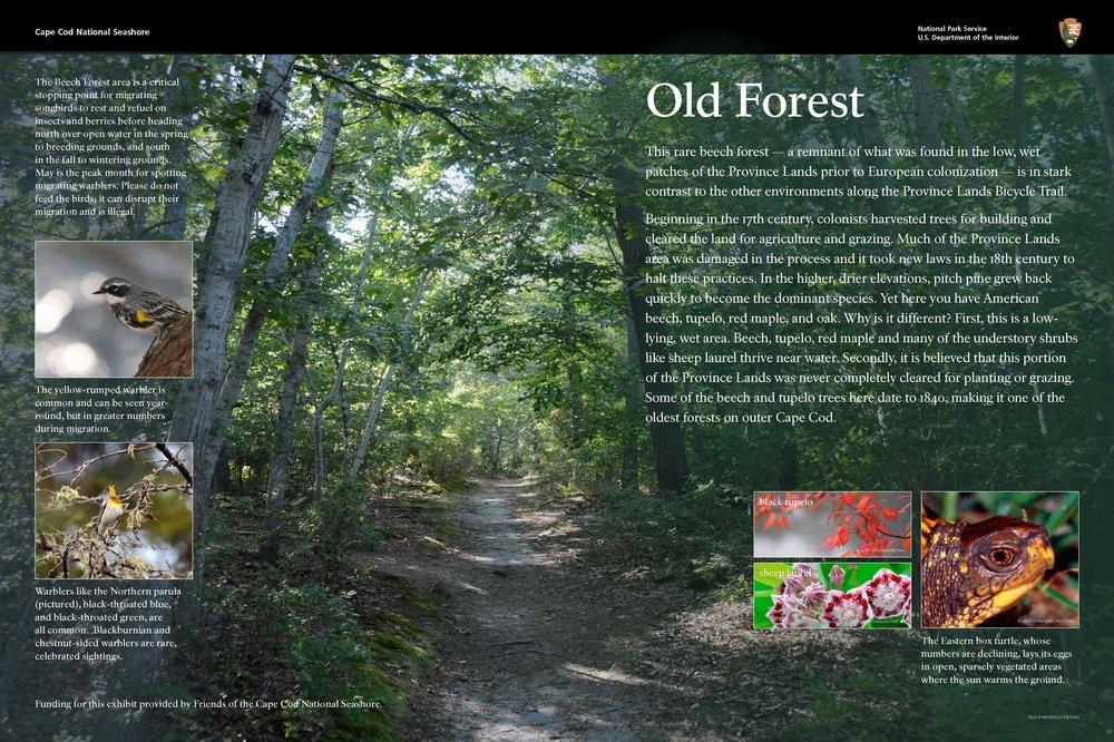 OldForest.jpg