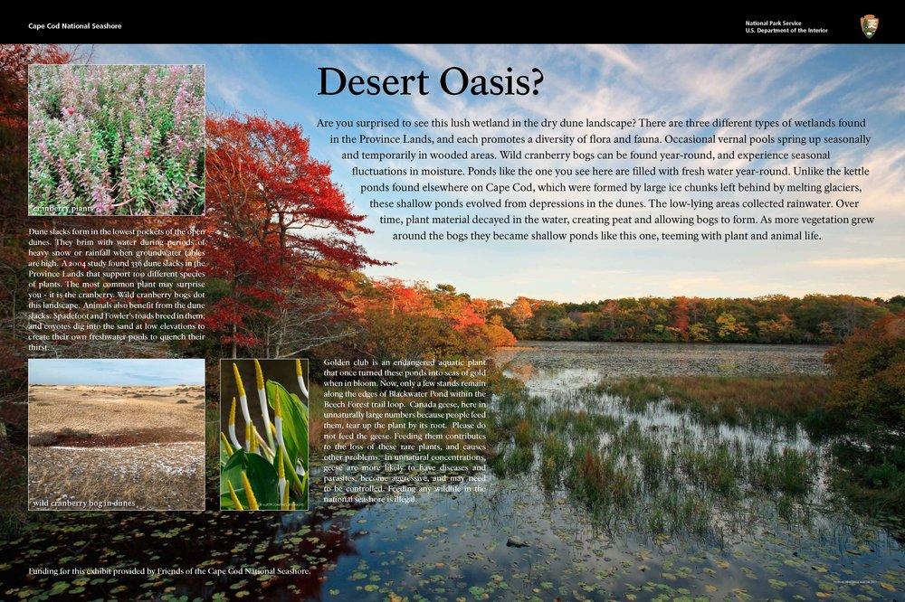 DesertOasis.jpg