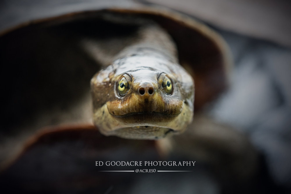 Turtle-EG-website.jpg