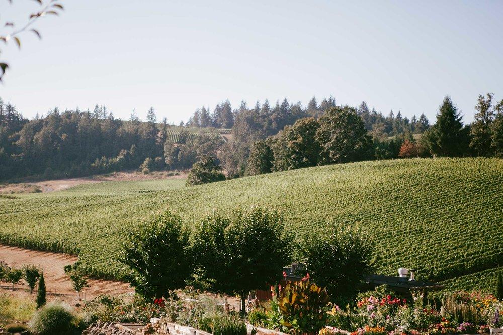 upper-vineyards.jpg