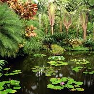 HAWAII TROPICAL BOTANICAL GARDENS -