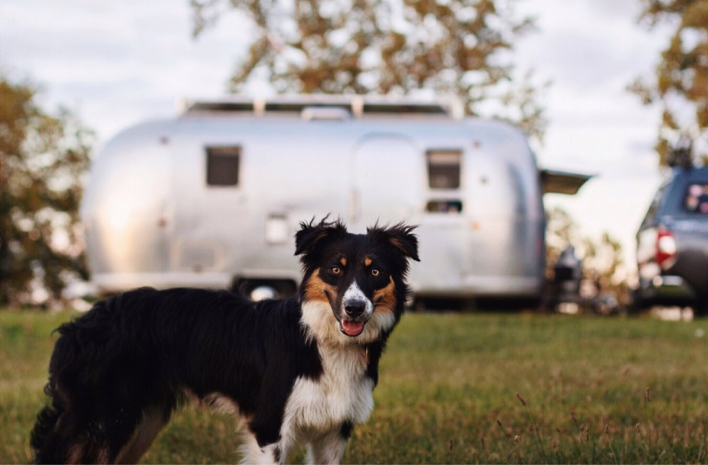 Parker in Front of Airstream.jpg