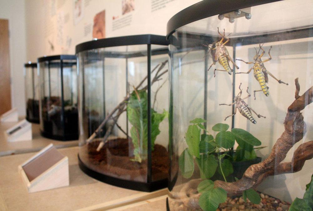 An insectarium