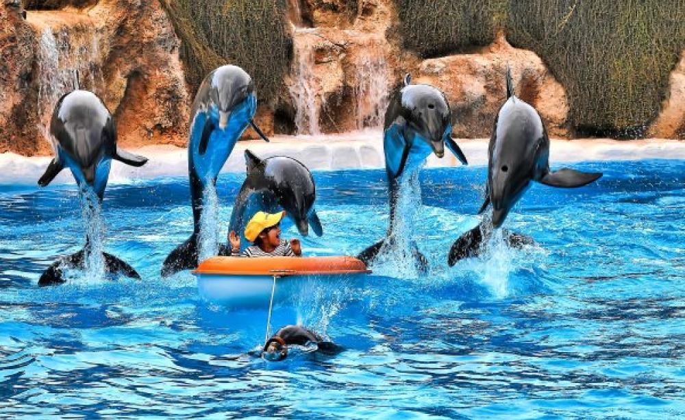 A dolphinaria