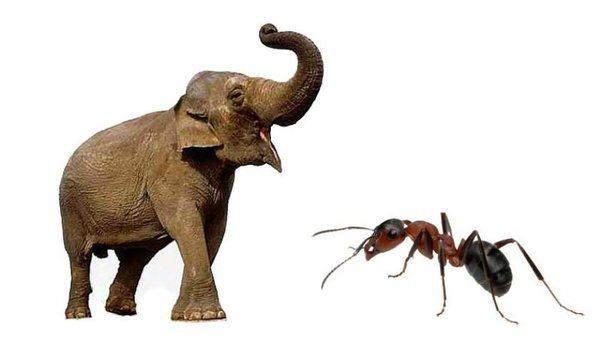 elephant-and-bull-ant.jpg