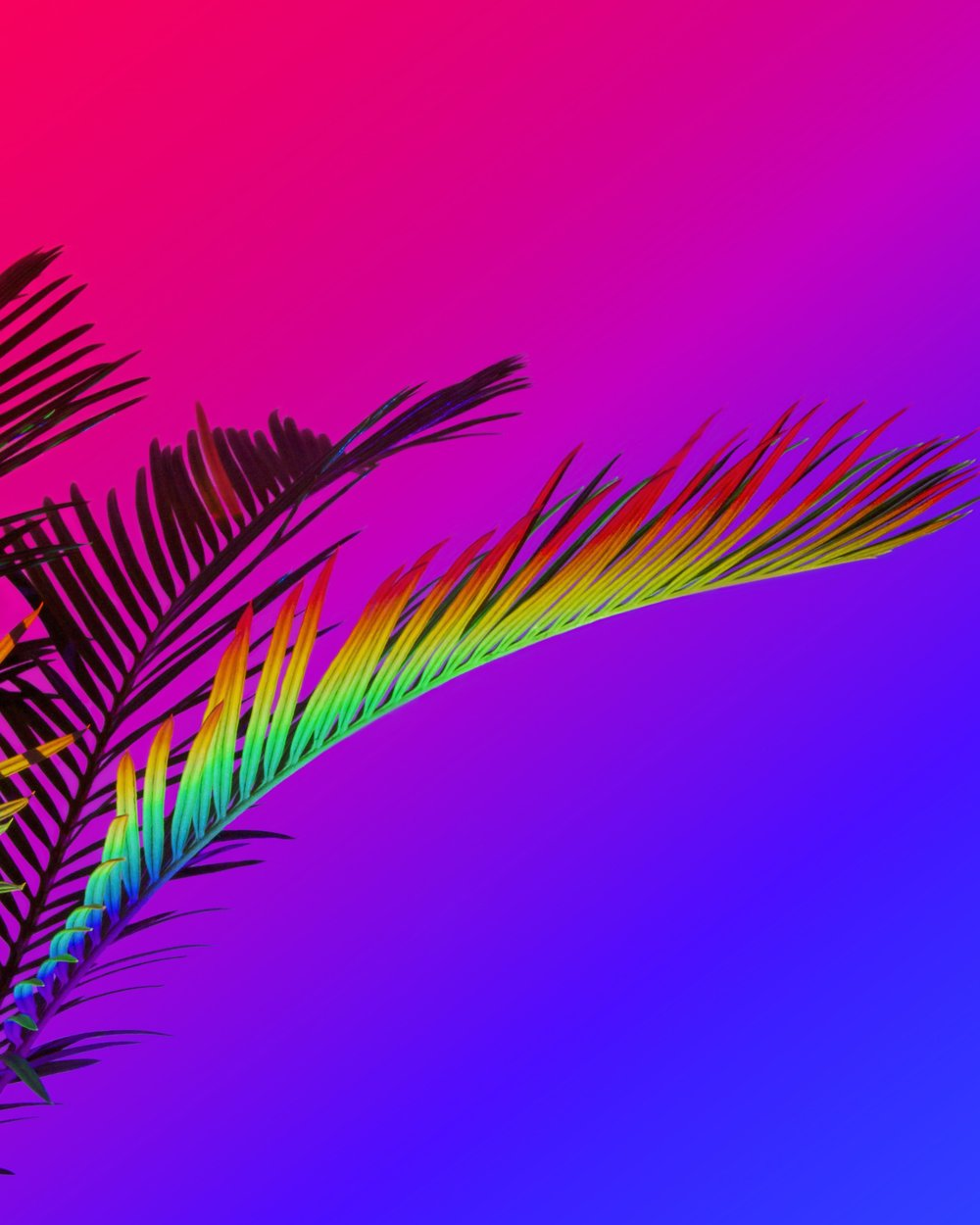 Signe_Pierce_034_Rainbow_Palm_76x61cm2015_web.jpg
