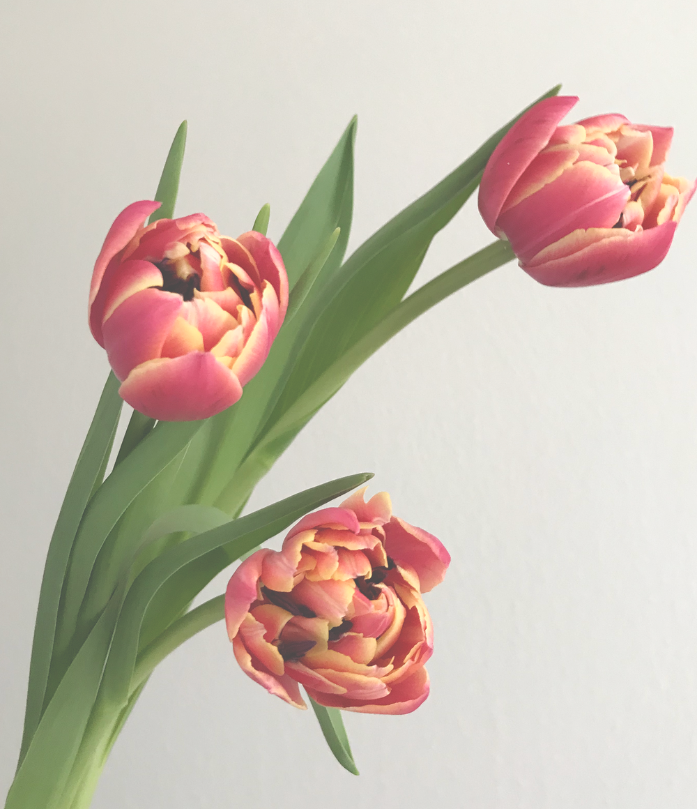 Tulips-Care.png