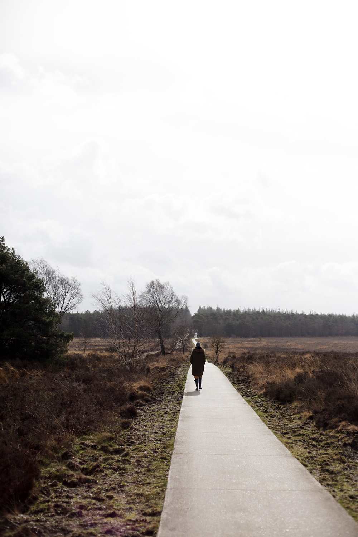 Leuvenumse bossen en heide