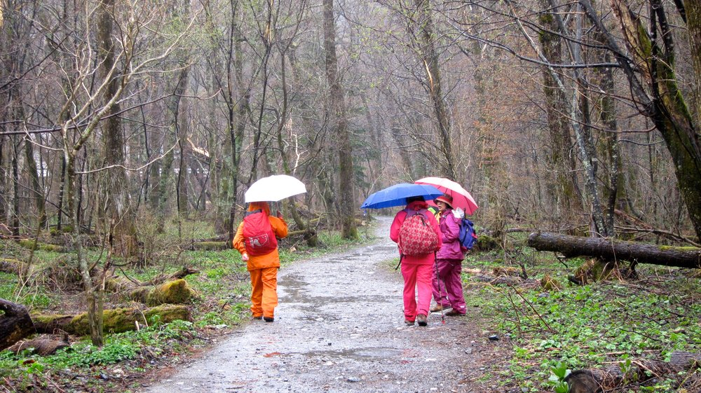 My favorite thing about hiking in the rain in Japan - the Japanese color coordinate their rain gear!