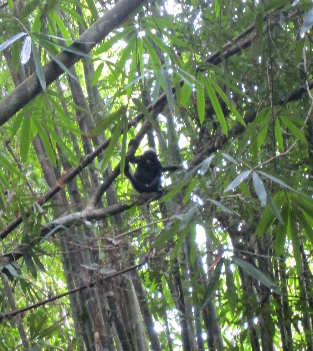 Monkey staring us down!