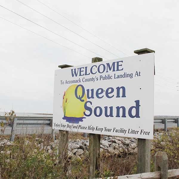 QUEEN SOUND LANDING - IN BRIEF: Several pull-outs along the causeway between Wallops and Chincoteague can produce lovely opportunities for photography of common saltmarsh species—shorebirds, Clapper Rail, herons and allies, terns, gulls—as well as a few bonus birds for the list. Recommended for at least a brief stop en route to the Chincoteague National Wildlife Refuge or on the return.ACCESS: Located on VA-175 in Herntown, VA, 23395. This is a public road with distinct pull-out. Never pull off to the side of the causeway where there are no legal pull-outs, and do not stop or slow down on the causeway, where locals and tourists alike seem to revel in high speeds and short following distances. Drive defensively here.