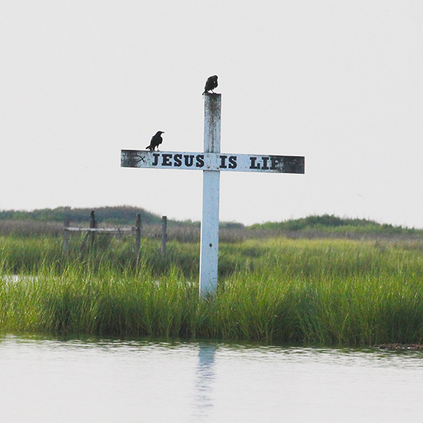 TANGIER ISLAND - IN BRIEF: A storied Chesapeake Bay island group with a small community, Tangier should be on every birder's bucket list, if not for any particular birds, then for the experience. Climate scientists predict that the island community might well be uninhabitable in the near future, as sea levels continue to rise.ACCESS: Foot ferries run from May through September from Onancock, Virginia and year-round from Crisfield, Maryland