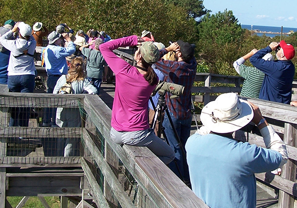 kiptopeke state park - A must-visit destination during fall and winter, with full-time raptor monitoring September 1 through November 30.