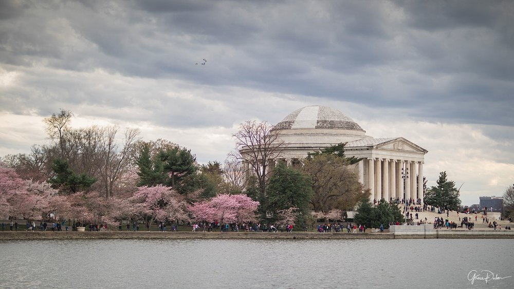 Lincoln Memorial, Cherry Blossom Festival