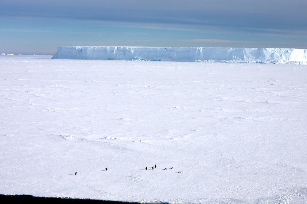 "Landfast ice or ""Fast"" ice is multi-year flat, solid ice made of both seawater and fresh water (from snow) that is attached to the far continental margin and can include grounded icebergs such as the one in the background). Note the penguins in the foreground!"