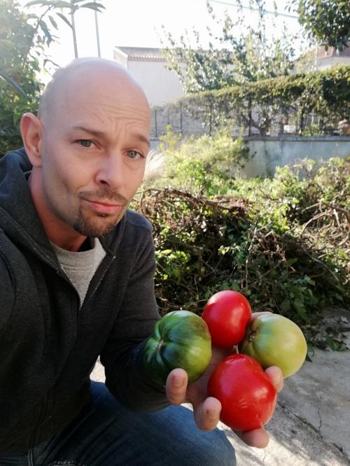 Des tomates, à défaut de citrouille pour la Toussaint!!! -