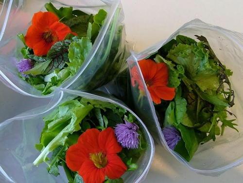 jay farm salads.jpg