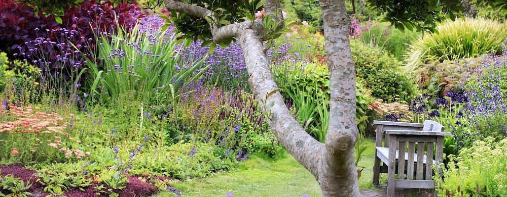 the Mendocino Coast Botanical Gardens in bloom
