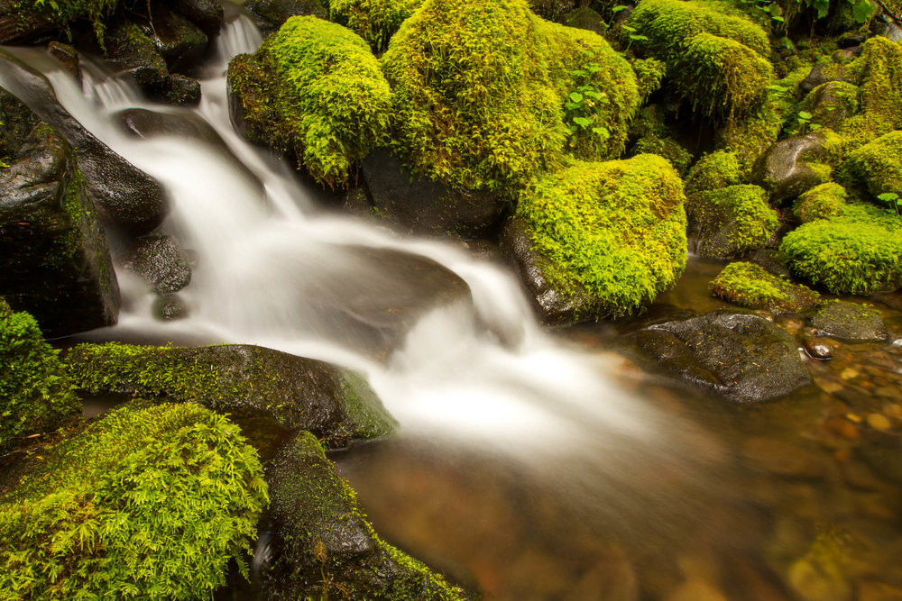 a stream flows among mossy rocks