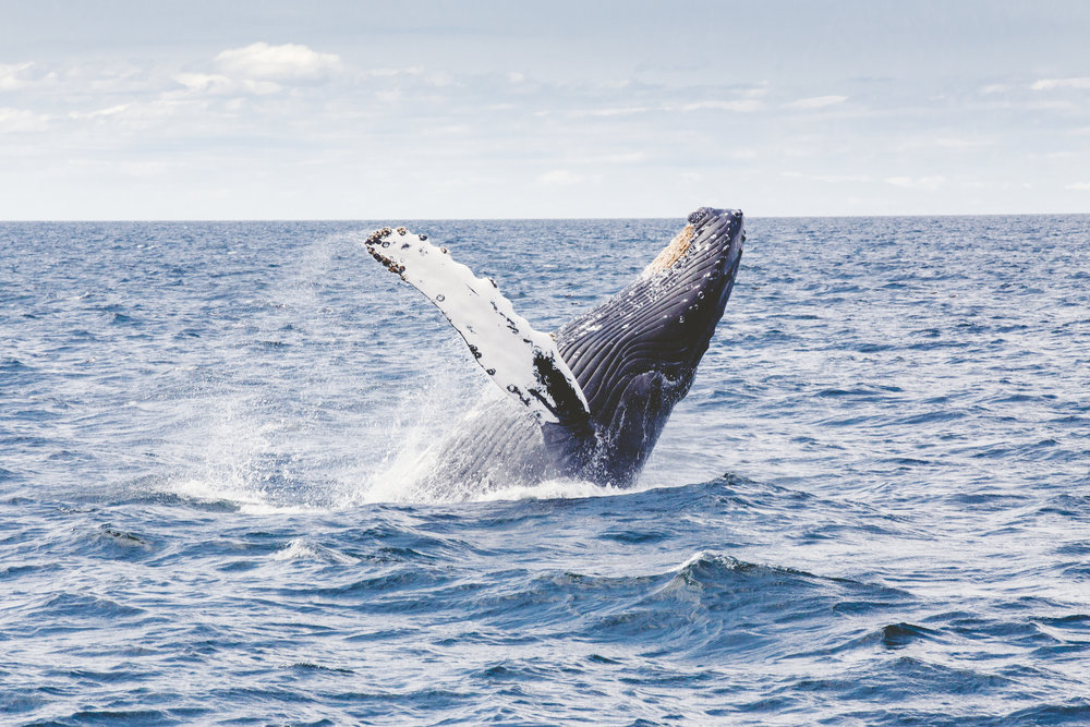 a whale's tail above the blue ocean surface