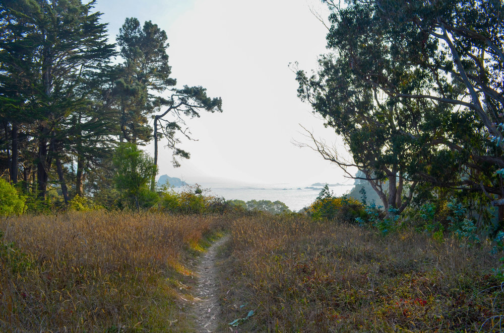 a path leading down to the beach near Glendeven Inn on the Mendocino Coast