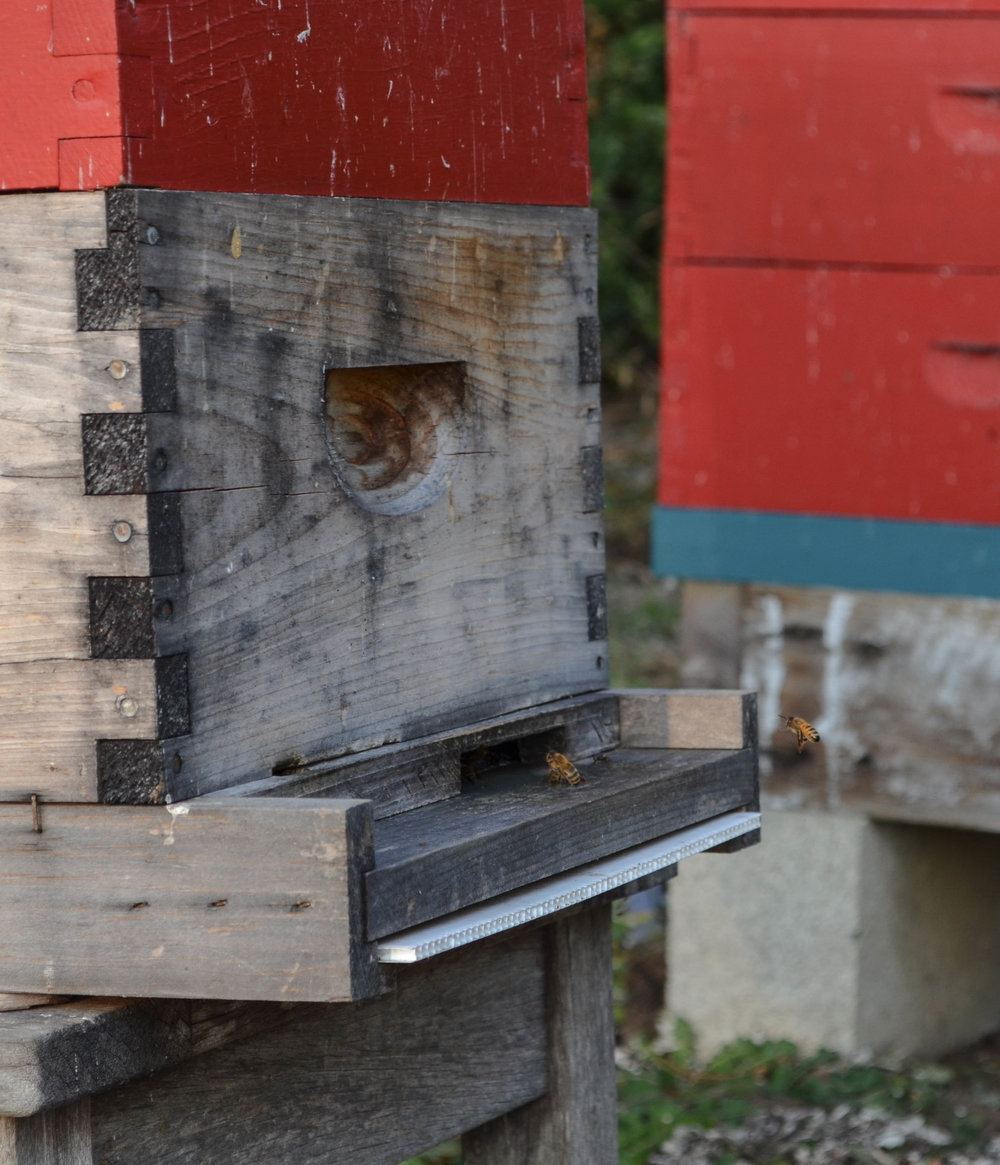 the bee hives at Glendeven Inn & Lodge