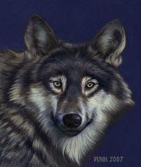 jason_dunn_wolf.jpg