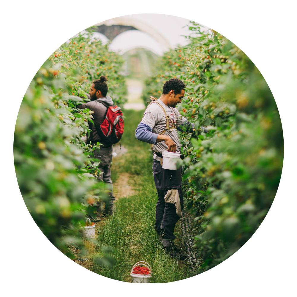 Berries-Info-3.jpg