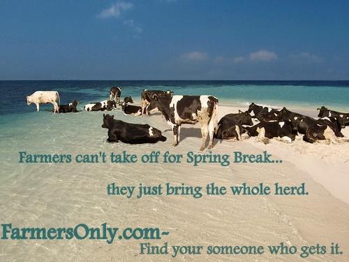 cowsbeach.jpg