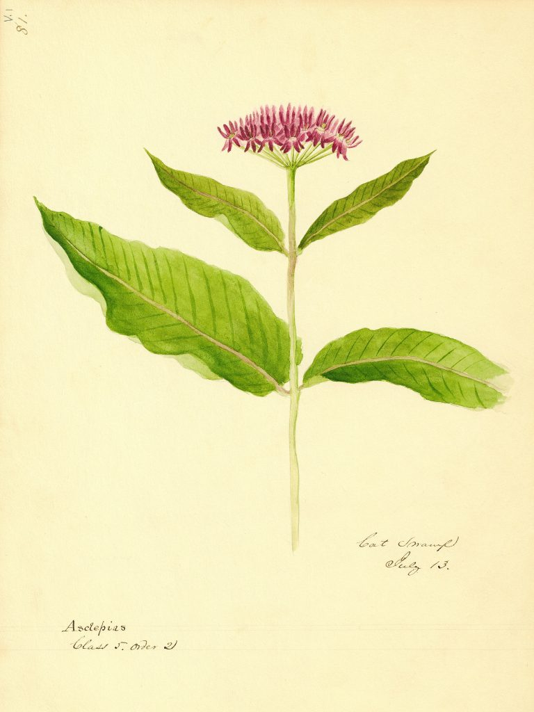 Entwined: Botany, Art and the Lost Cat Swamp Habitat