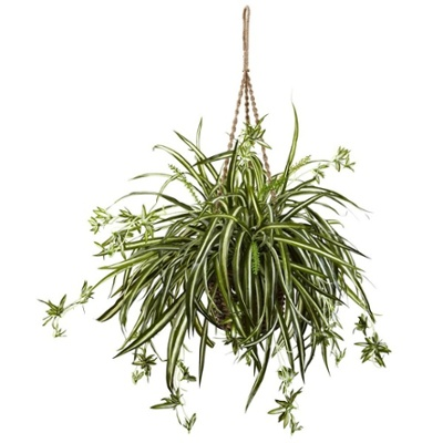 Spider Plant.jpg