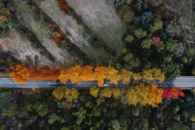 The vast woodland in #Portugal features these awesome looking trees which line up the country roads. Autumn is soon cool, it gifts us with these lovely colours! . . . #aerial #drone #aerialart #depthsofearth #dronephotography #djimavic2 #mavic2pro #twentyfoursevendrones #travelphotography  #pureportugal #earthfocus #fromwhereidrone #autumncolours #coloursofautumn #aerialphotography #countryroad