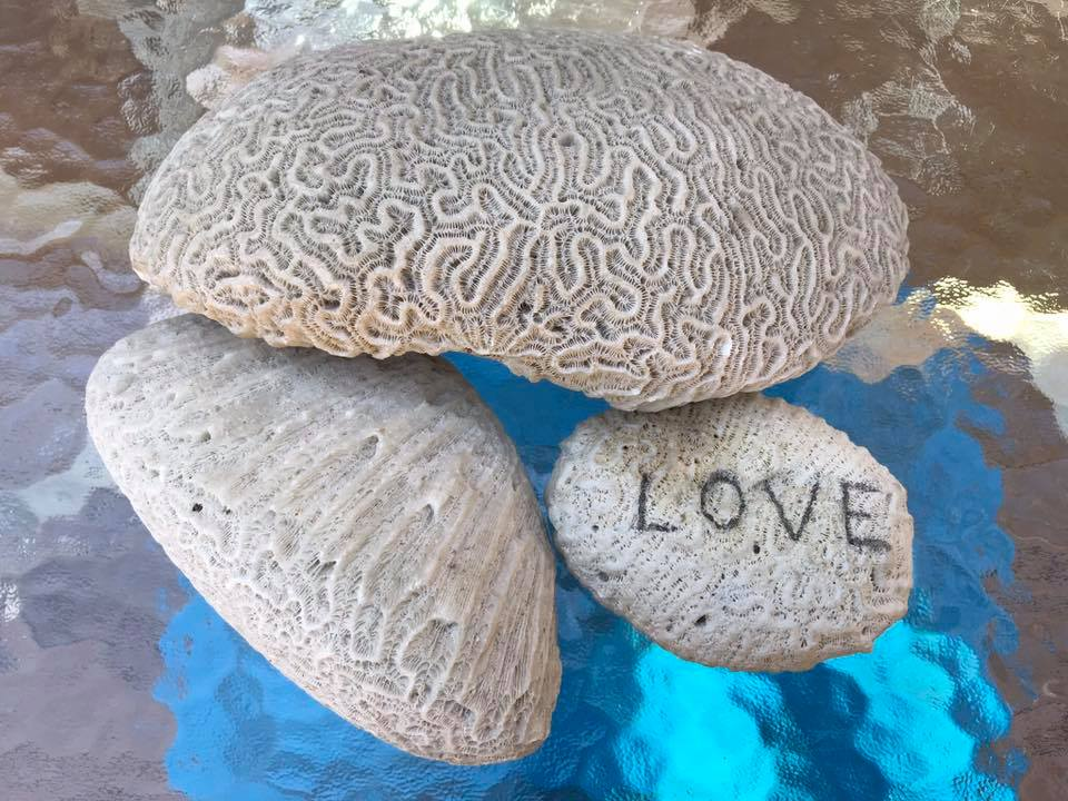 Day 78 Painted Love on Brain Coral.