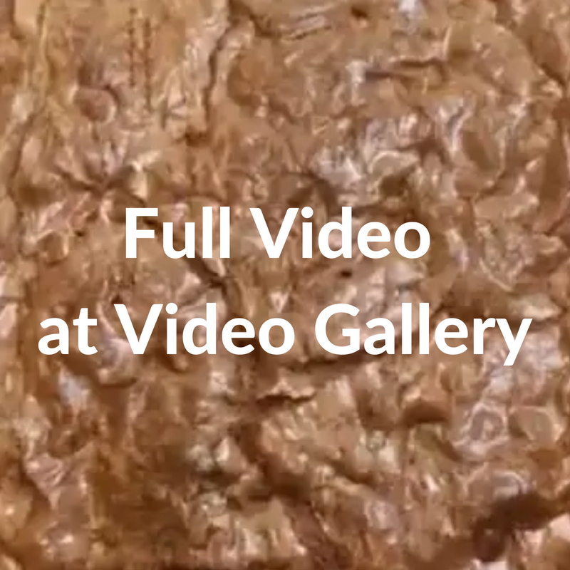 Day 19 Full video at Video Gallery