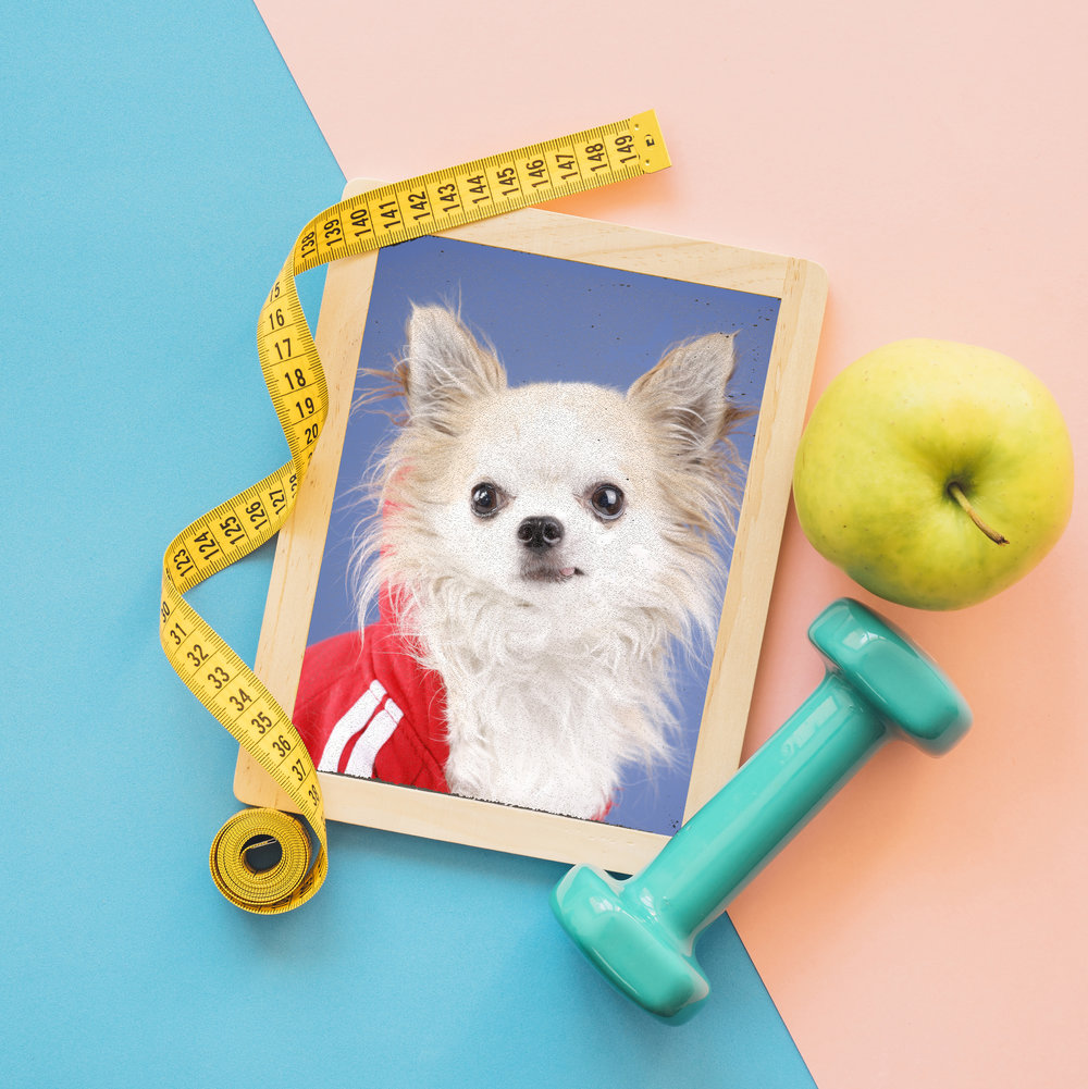 Meet our life coach Chihuahua® - Practical Wisdom for Curious Minds