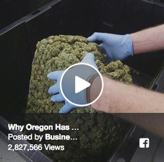 ✨🌳📣🌳📣✨ @businessinsider's Abby Tang produced a FANTASTIC story about what's at stake with #cannabis export for Oregon farmers. Check it out here: http://bit.ly/GetLit01 ✨🌳📣🌳📣✨ #ONEFix #craftcannabis #export #GetLIT #oregonfarmers #SB582