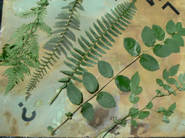 Alternate view of leaves applied as stencils.