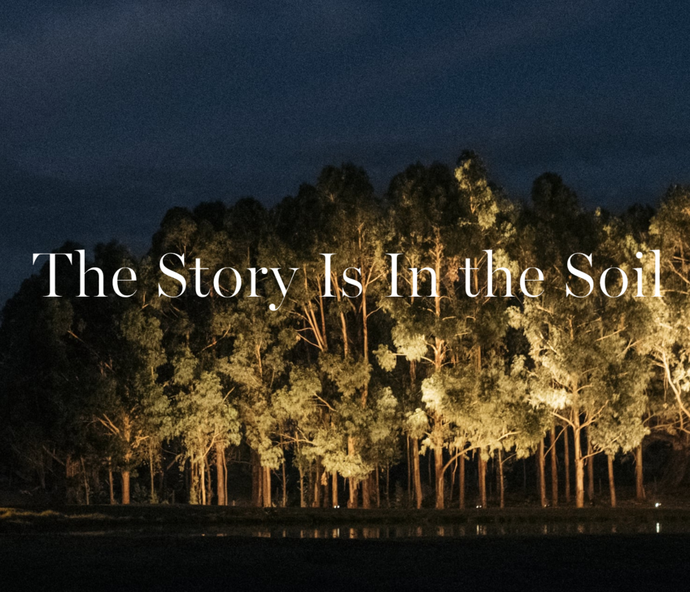 Headline for  Bird in Hand winery's About page , by C. Black Content