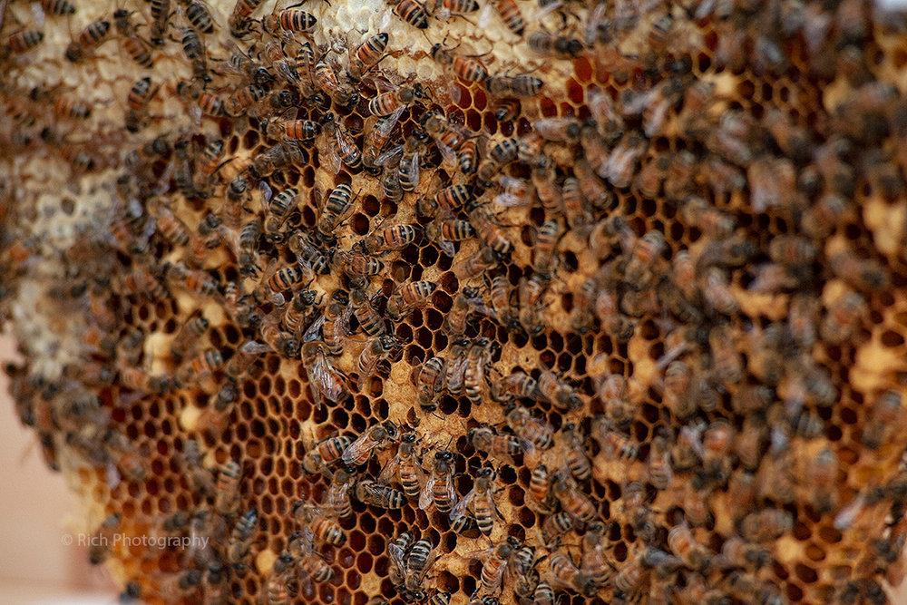Busy Bees DSC_9612 copy.jpg