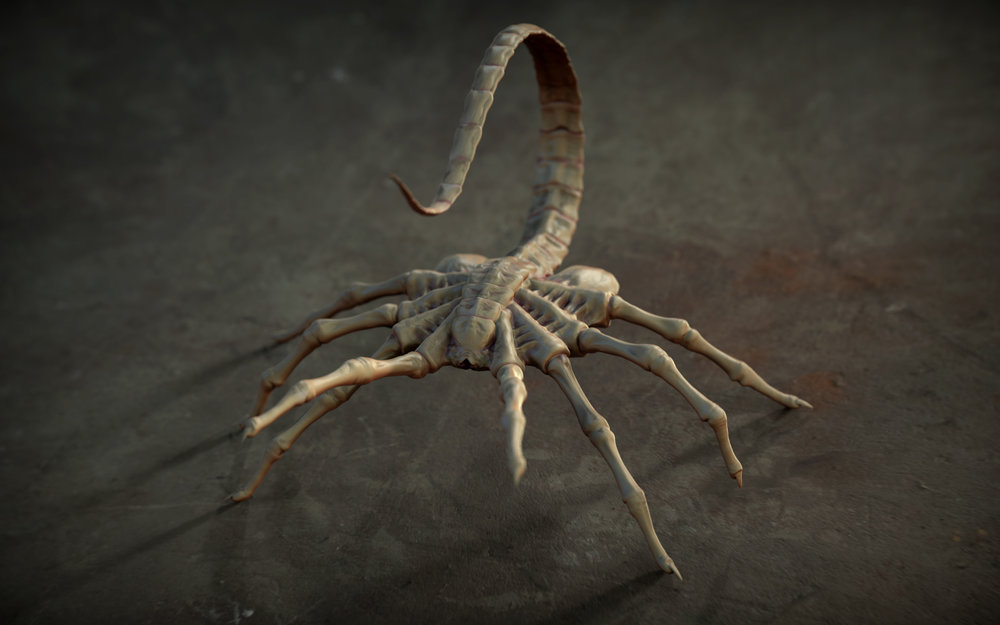 Personal Work_Facehugger