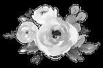 Flower - Step 1.png
