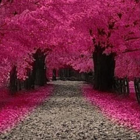 Trees_large.jpg