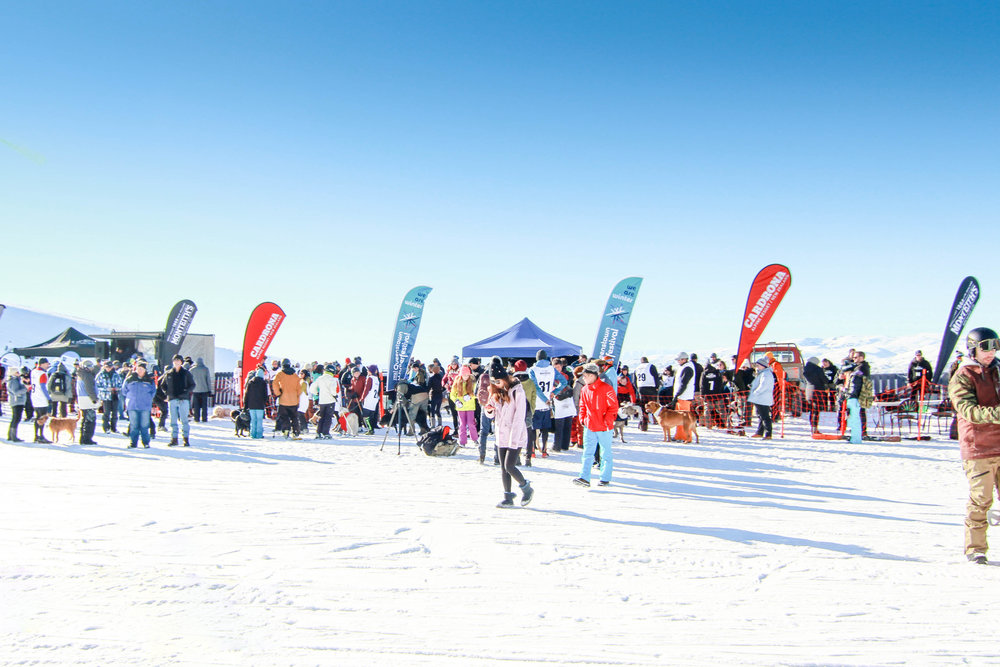Become A Sponsor Real Journeys Queenstown Winter Festival