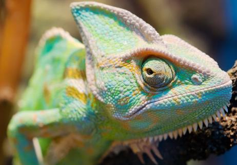Zoo turquoise copy.jpg