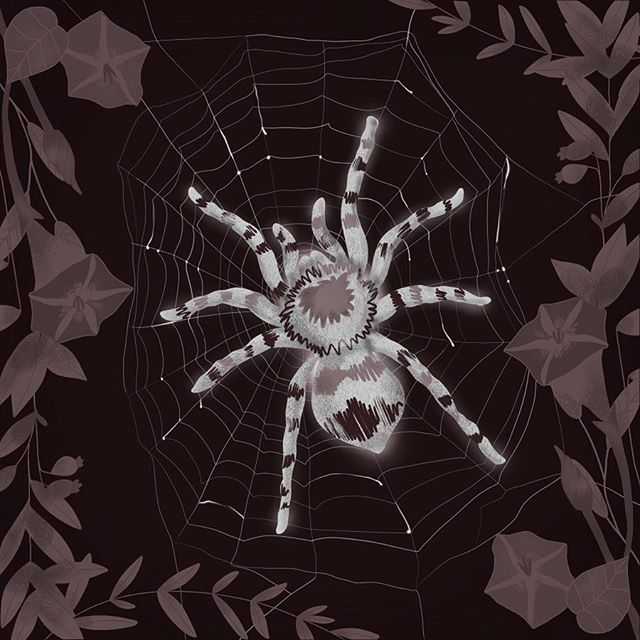 Have you ever spent days drawing something you're actually afraid of? Let me tell you, your appetite disappears 😂....😅....😐🕷🕸 . . . #womenofillustration #illustrationartists #illustration #procreate #ipadillustration #illustrationdaily #igdaily #spiders #magic #spiderman