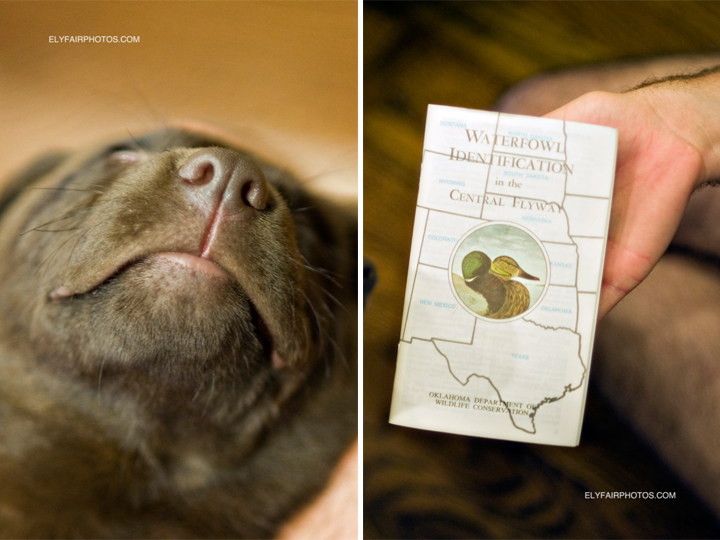 When he was brought home the first thing this little chocolate labrador retriever did was find the waterfowl identification book hopefully foreshadowing his real pursuit later on when he becomes a hunting dog.