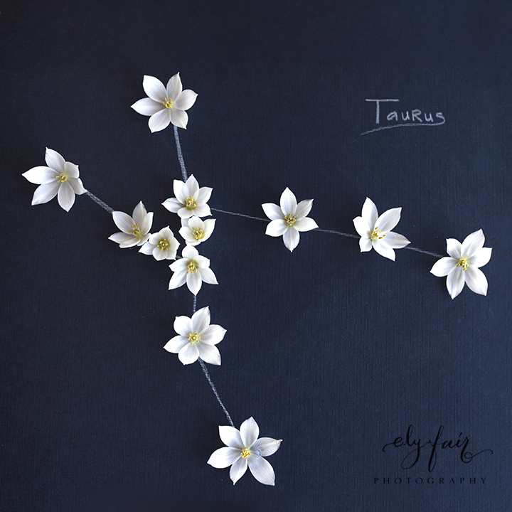taurus constellation | Ely Fair Photography | Juniper Designs